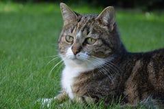 Katt på gräset Arkivfoton