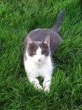 Katt på gräset Royaltyfri Fotografi