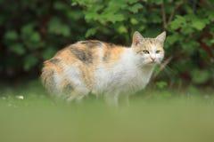 Katt på gräsmatta Arkivbild