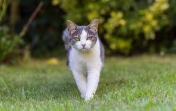 Katt på gräsmatta royaltyfria bilder
