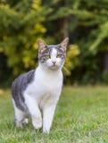 Katt på gräsmatta royaltyfria foton