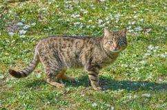 Katt på gräsmattan fotografering för bildbyråer