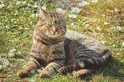 Katt på gräsmattan royaltyfri fotografi