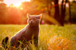 Katt på gräsmattan Royaltyfri Bild