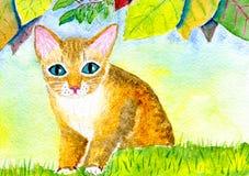 Katt på gräsmattan Arkivbilder