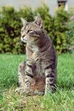 Katt på gräsståenden Fotografering för Bildbyråer