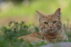 Katt på grön gräsmatta Arkivbild
