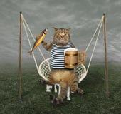 Katt på gunga med öl 2 royaltyfri foto