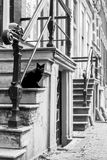 Katt på ingångskanalhus, Amsterdam Arkivfoton