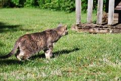 Katt på jakten Fotografering för Bildbyråer