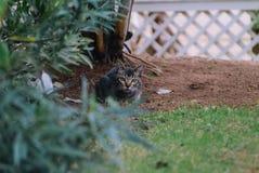 Katt på jordning Arkivfoto