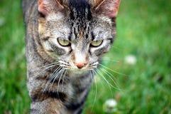 Katt på kringstrykandet Royaltyfria Bilder