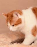 Katt på säng Fotografering för Bildbyråer