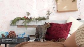 Katt på sängen arkivfilmer