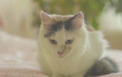 Katt på sängen arkivfoto