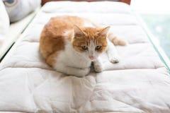 Katt på sängen Fotografering för Bildbyråer