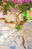 Katt på smala gator av den Skopelos ön, Grekland Royaltyfria Bilder