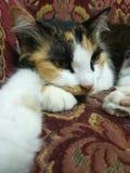 Katt på soffan Arkivfoton