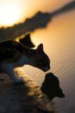 Katt på solnedgången nära sjön Arkivbild