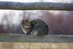 Katt på staket Fotografering för Bildbyråer