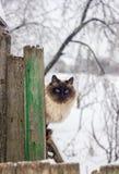 Katt på staket Arkivbild
