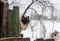 Katt på staket Royaltyfria Foton