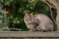 Katt på staket royaltyfri bild