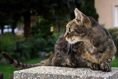 Katt på staket slovakia royaltyfri foto