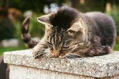 Katt på staket slovakia royaltyfri fotografi
