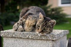 Katt på staket slovakia royaltyfri bild