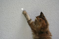 Katt på staketet som spelar med en stråle av solljus Royaltyfria Foton