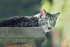 Katt på stenväggen Royaltyfri Fotografi