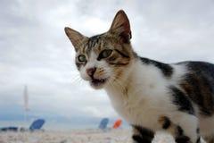 Katt på stranden Arkivfoton