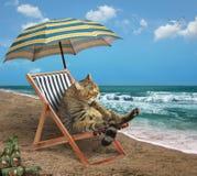 Katt på stranden 3 Arkivbild