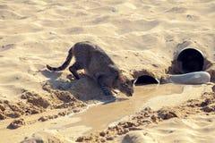 Katt på stranden Royaltyfri Bild
