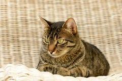Katt på sunlounger Arkivbild