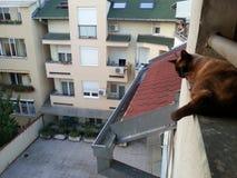 Katt på taket Fotografering för Bildbyråer