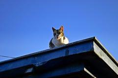 Katt på taket arkivfoton