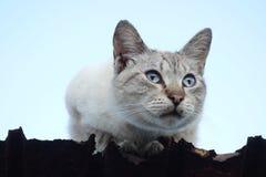 Katt på takkanten Arkivbilder