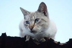 Katt på takkanten Arkivbild