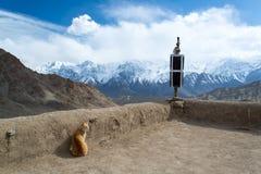 Katt på templet Royaltyfria Bilder