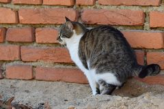 Katt på toaletten nära husväggen arkivbilder