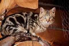 Katt på trä Royaltyfri Fotografi