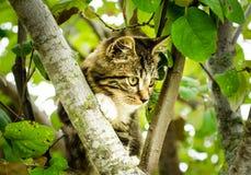 Katt på träd Arkivfoto