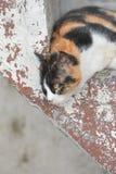 Katt på trappablicken Royaltyfri Fotografi