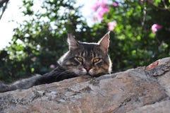 Katt på väggen Royaltyfria Bilder