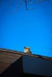 Katt på väggen Arkivbild