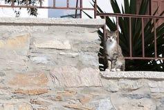 Katt på väggen Arkivfoton