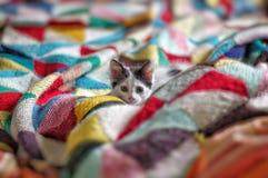 Katt på vaket Royaltyfri Bild
