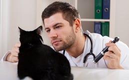 Katt på veterinären Arkivbild
